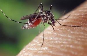 A Strike Back Against Zika Virus